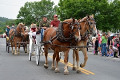 Horses pull a carriage along Pleasant Street in the 2016 Stevens Alumni parade. 1/125 sec., F5.6, automatic-no flash mode, ISO 200, 55mm telephoto).Photo: Stephen C. Fitch June 11, 2016 11:12 AM